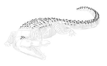 how to draw crocodile step by step 10