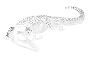 how to draw crocodile step by step 11