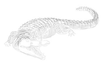 how to draw crocodile step by step 12