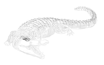 how to draw crocodile step by step 14