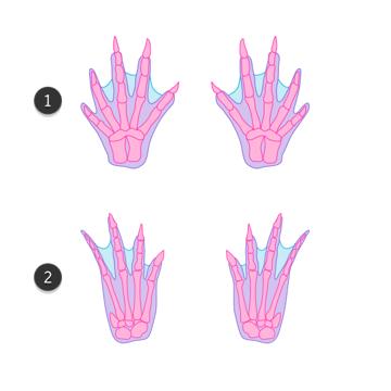 how to draw crocodile paws claws feet