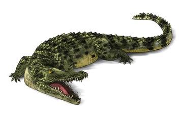 how to draw crocodile step by step 19