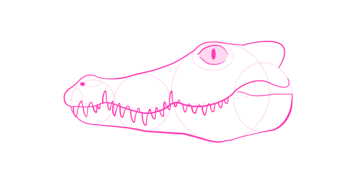 how to draw caiman head