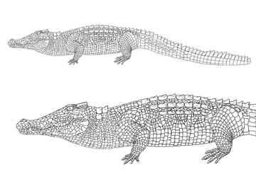 how to draw crocodile alligator scales pattern 10