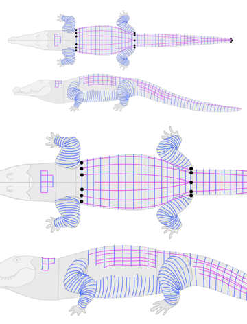 how to draw crocodile alligator scales pattern 2