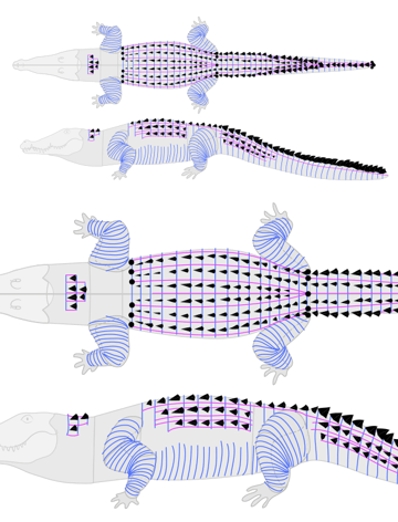 how to draw crocodile alligator scales pattern 3