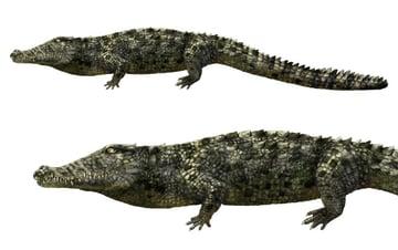 how to draw crocodile