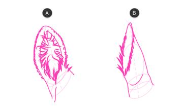 how to draw zebra ears 4