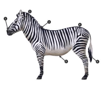 how to draw zebra pattern stripes 4