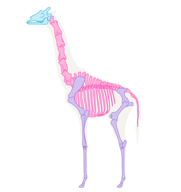 how to draw skeleton giraffe pose