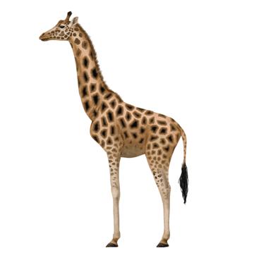 how to draw giraffe pattern