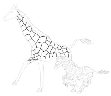 how to draw zebra giraffe 10