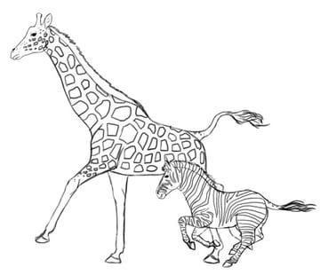 how to draw zebra giraffe 12