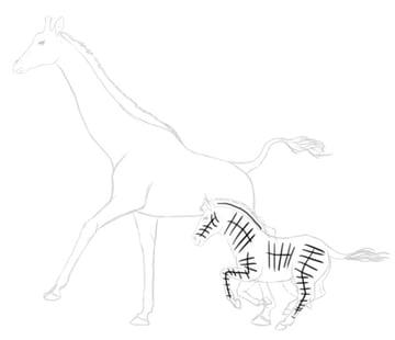 how to draw zebra giraffe 8