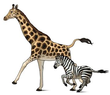 how to draw zebra giraffe 13