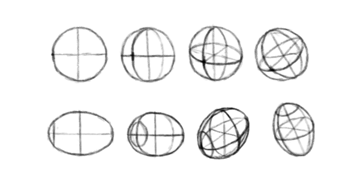 how to draw torso sphere ellipsoid perspective 3d