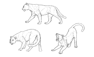 how to draw animal depth perspective finish