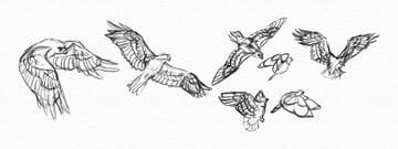 practice wings flying birds