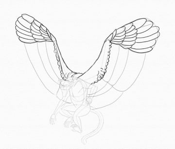 draw wings feathers primaries