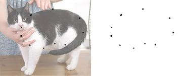 optical illusions how to draw animal torso