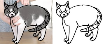 optical illusions how to draw cat precisely