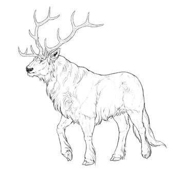 how to draw a magical mighty deer tutorial