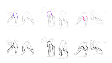 how to draw lion triceps