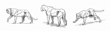 how to draw animals with gestures without anatomy