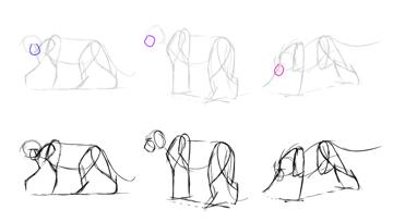 how to draw lion snout muzzle