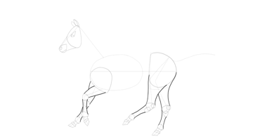 how to draw horse legs