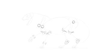 lion bones drawing