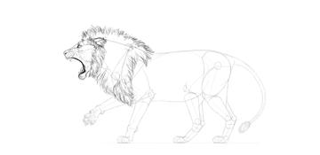 lion mane fluffy