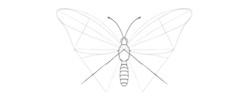 butterfly lower wing how to draw