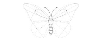 butterfly lower wing discal cell where