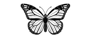butterfly darkened veins