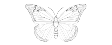 butterfly wing upper wing markings