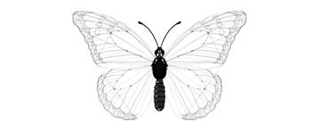 butterfly body pattern