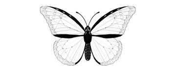 butterfly costal inner margins darkened