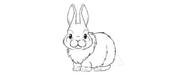 bunny fluffy paws