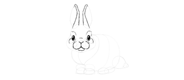 bunny ears fur