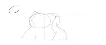 dragon muzzle shape