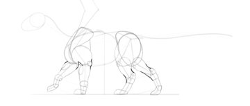 dragon limb muscles