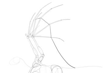 dragon membrane