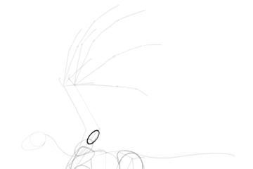 dragon wing biceps