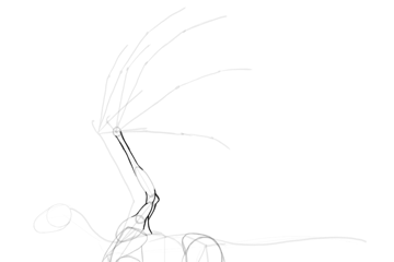 dragon wing muscles outline