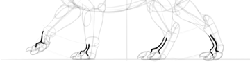 dragon paws anatomy