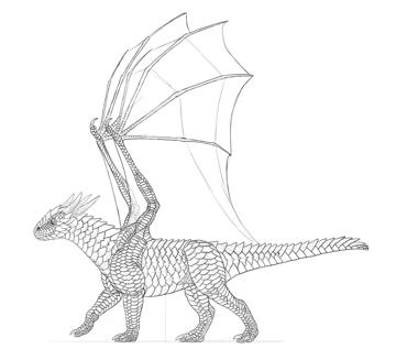dragon membrane detailed