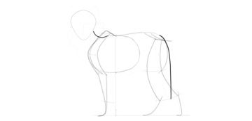 wolf drawing tail position