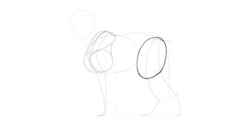 wolf drawing fluffy thigh