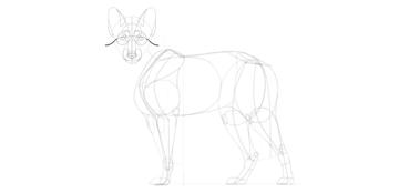 wolf drawing mane cheeks